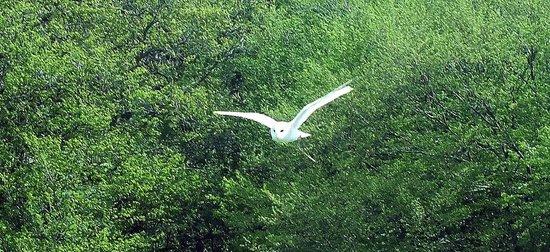 Rare Breeds Centre: handling an owl