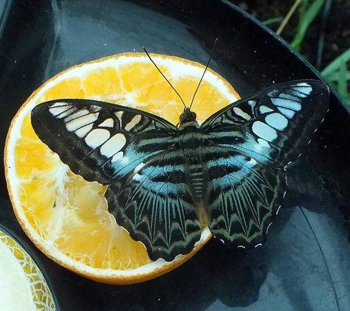 Rare Breeds Centre: vlinder