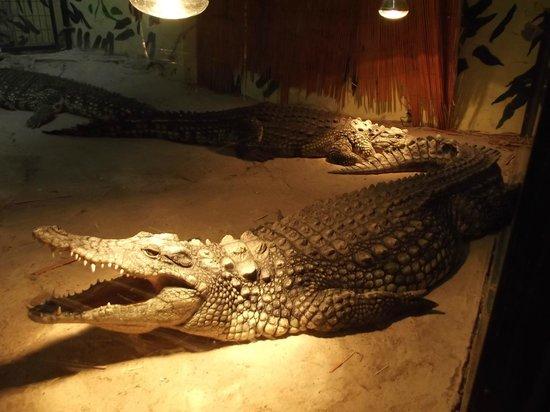 Parc Aquarium Les naiades : Les crocodiles