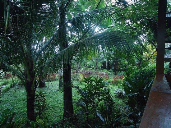 Bunaken Kuskus Resort: Ground in front of the bungalows