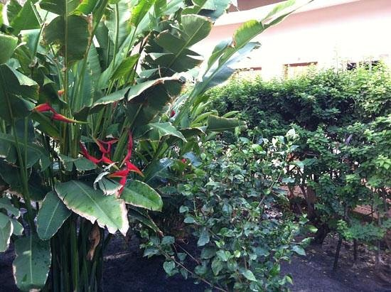 Le Flamboyant Hotel: Fleur exotique dans les jardins