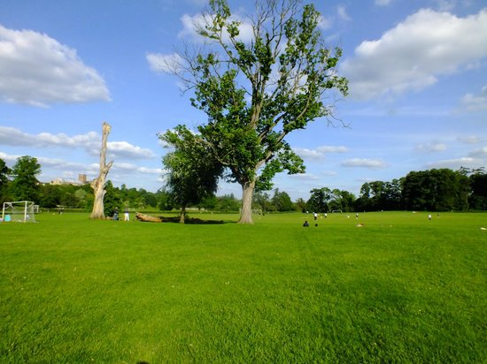 Verulamium Park: A lovely place to be in Summer