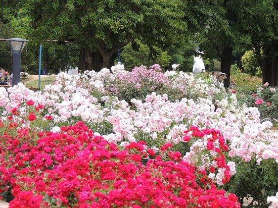 Ina Choseishiko Memorial Park