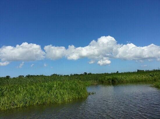 Hahnville, LA: Swamp!