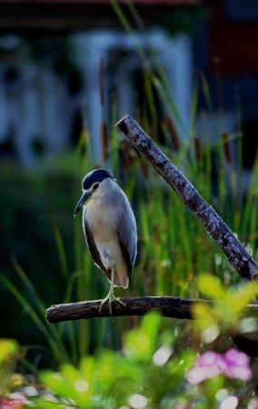 Ayodya Resort Bali: the bird at the pond
