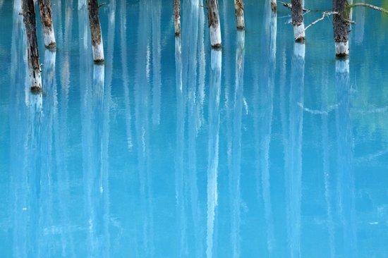 Biei-cho, Japan: 神秘的な青い池