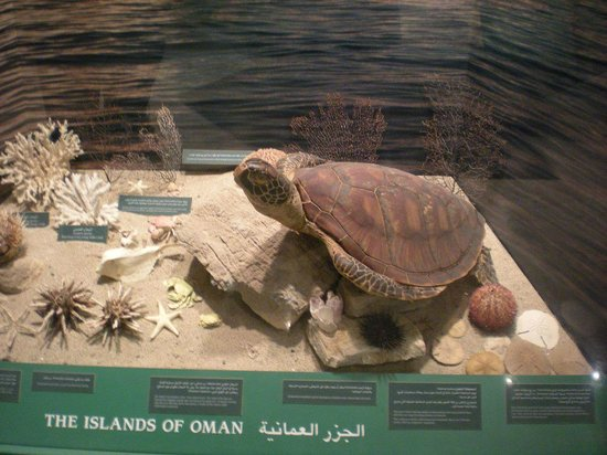 Natural History Museum : Turtle