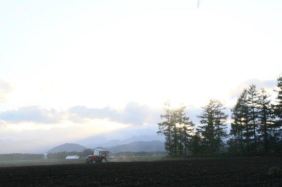Hanahata Bokujo : 陽が沈む花畑牧場