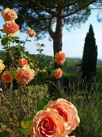 The Roses of Il Grande Prato