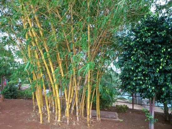 Balaji Resorts, Velhe Pune: Bamboos