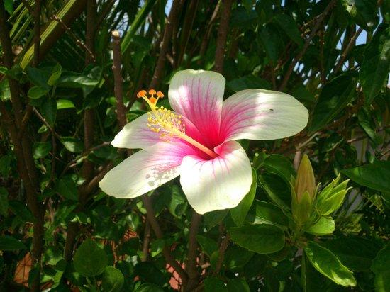 Balaji Resorts, Velhe Pune: Flowers in Garden