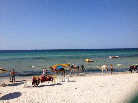 Skanes Family Resort: Camels on the beach!