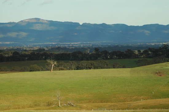 Westgate Vineyard & Country House: View from track beyond houses