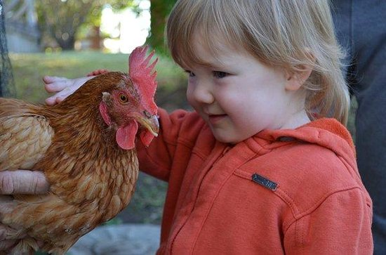 Kilcoy Farmstay: feeding the chickens