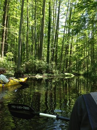 Coastal Kayak: Bald Cypress tour with Todd