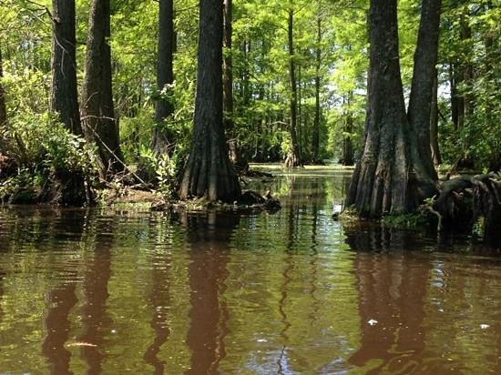 Coastal Kayak: Winding through the cypress...