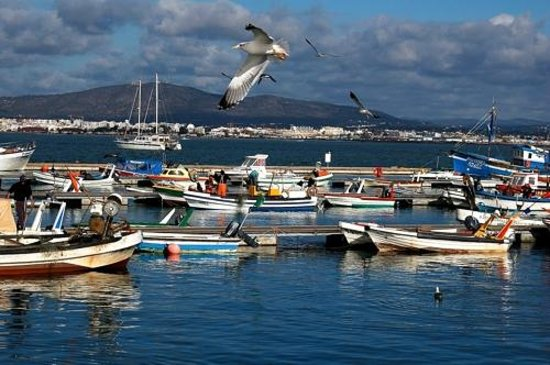 Culatra island boat trips in the ria formosa olh o - Natura portugal ...
