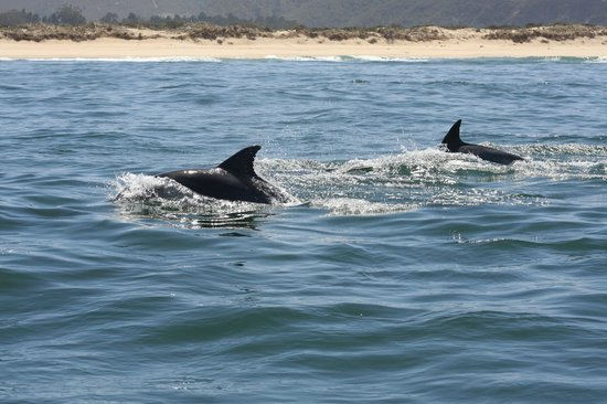Ocean Blue: Dolphins keeping pace with boat