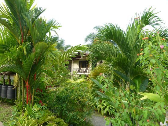 Casa Luna Hotel & Spa: Üppige Natur