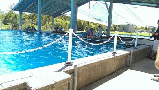 Dolphin Picture Of The Institute For Marine Mammal Studies Gulfport Tripadvisor