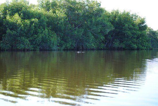 Tour the Glades - Private Wildlife Tours : The water is like glass!