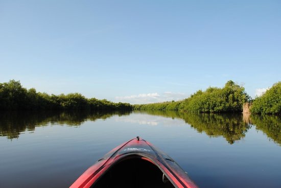 Tour the Glades - Private Wildlife Tours : The gorgeous view you have while traversing the open water between tunnels