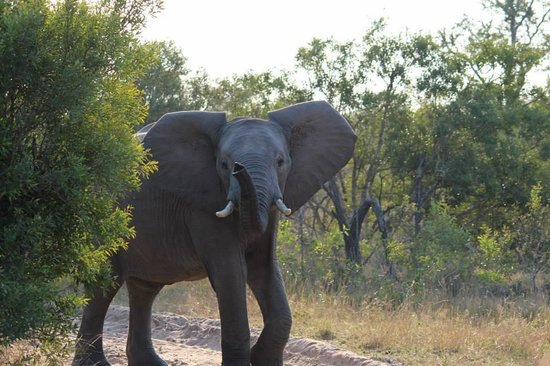 Elephant Plains Game Lodge: Elephant Crossing