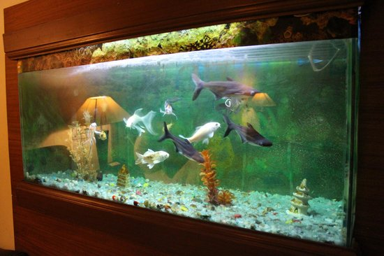 Nice fish tank in room picture of hotel hari piorko new for Fish hotel tank