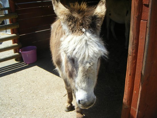 Abbotsbury Childrens Farm: Donkey