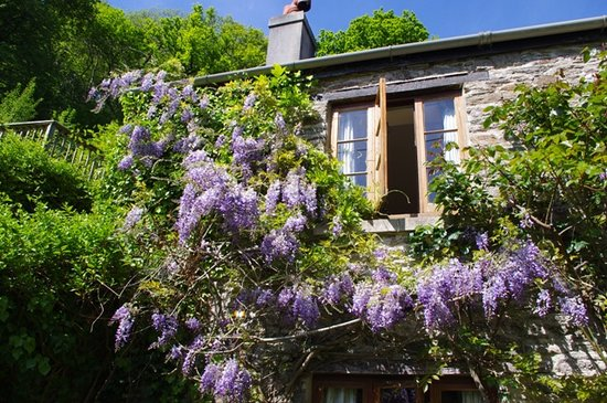 Watermill Cottages: Quack Cottage wisteria huge private fenced garden, south facing, Slapton, Nr Dartmouth