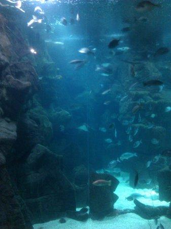 Porto Moniz, Portugal: Uno de los acuarios del museo