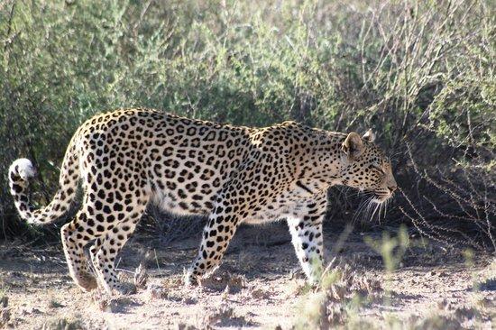 Kalahari Desert Animals
