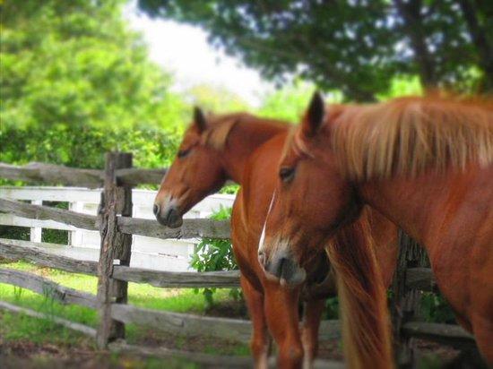 Merchants Square: Belgian Draft Horses