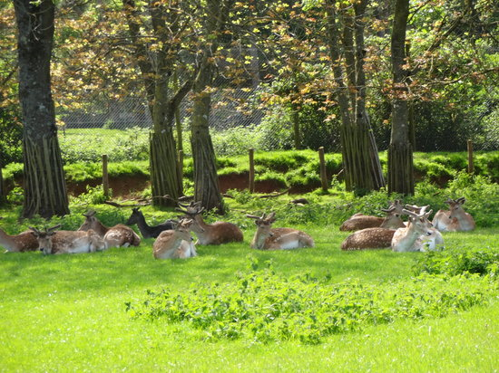 Warminster, UK: deers