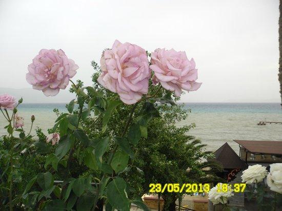 Hotel Fantasia Deluxe : Цветы