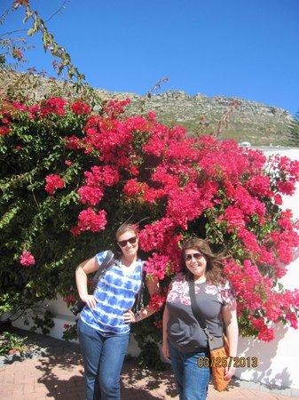 Sunny Cove Manor: Love the local flora!