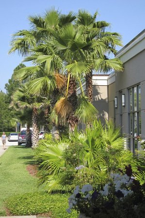 Sheraton Jacksonville: landscaping at the front of the hotel