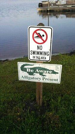 Reed Bingham State Park: beware.... ( I didn't see any tho)