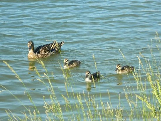 Wyndham Governor's Green: Mama and babies