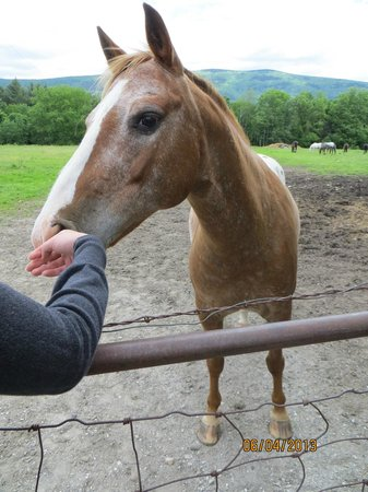Mountain View Ranch: Petting horses