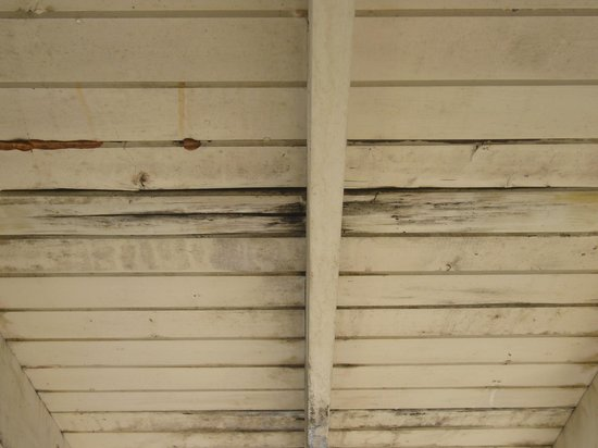 Fireside Motel : Mildew and rot under stairwell roof