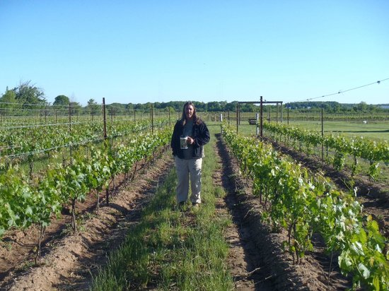 Crush On Niagara Wine Tours: In the vineyard behind Harvest House