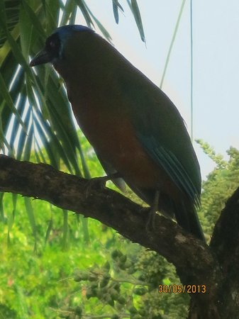 Top O' Tobago Villa & Cabanas : bird at breakfast