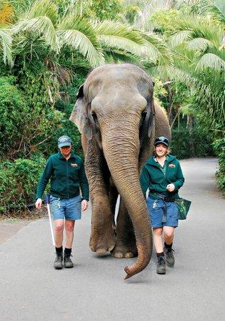 Perth Zoo : Tricia's daily walk