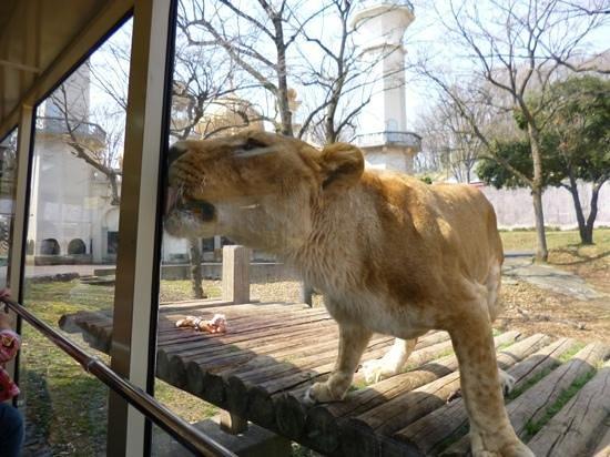 日野市, 東京都, ライオンバスから。迫力あります。