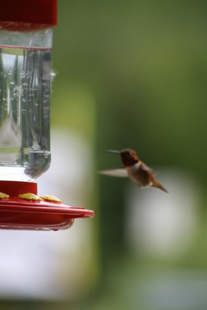 Patty's Place at 19 Mile House : hummingbirds