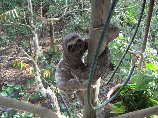 La Casa Fitzcarraldo: Sloth