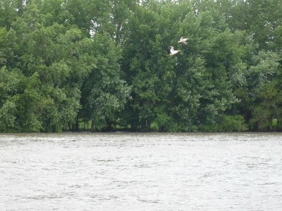 Starved Rock Lodge & Conference Center: View of the Illinois River in the park