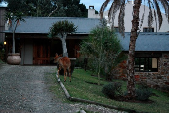 The Baroness Luxury Safari Lodge: Animals hanging around the lodge