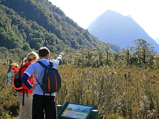 Milford Track Guided Day Walk - Real Journeys